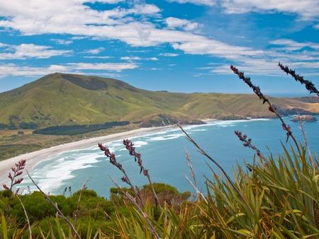 Coastal view, Pacific coast of New Zealand, Otago Peninsula photo
