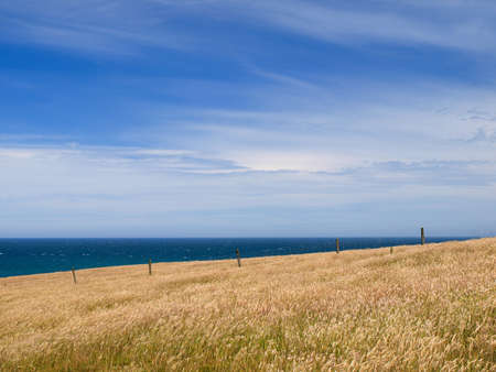 Grassy hill background in coastal rural landscape Stock Photo - 12892296