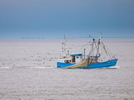 Fishing vessel on the waddensea surrounded by gulls Stock Photo
