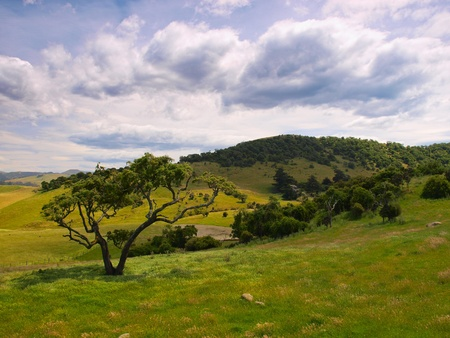 Lonely tree in a hilly rural landscape Stock Photo - 12892711