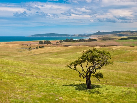 juniper tree: Lonely tree in a hilly coastal landscape Stock Photo