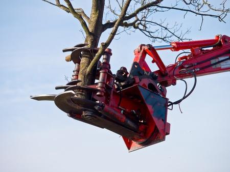 camion grua: Grúa árbol de corte está levantando una parte de un árbol de corte Editorial
