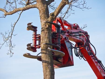 deforestacion: La garra de una grúa de la tala de árboles a punto de cortar un árbol Foto de archivo