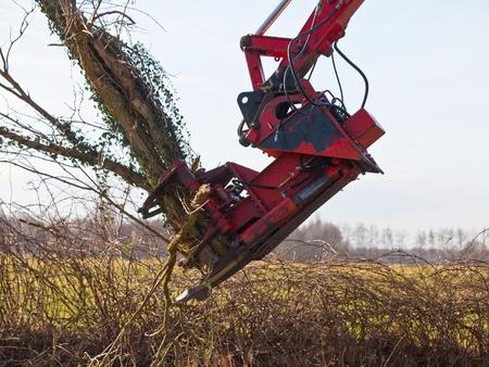 boom kappen: Boom snijden kraan is het vellen van een boom Stockfoto