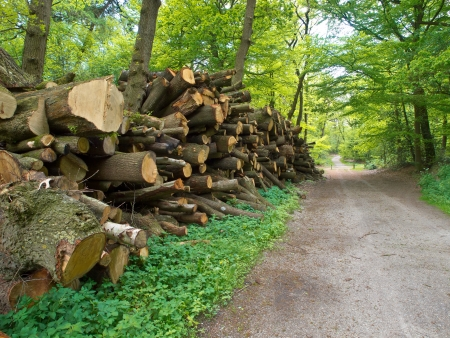 forestry industry: Giant pile of cut logs along a forest road in spring
