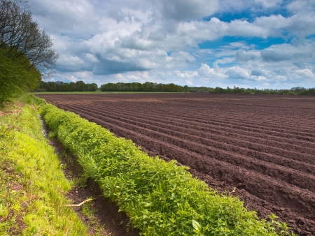 ploughed field: Newly planted field in spring under cloudy sky