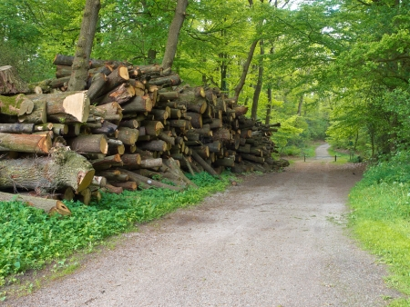 Giant pile of cut logs along a forest road in spring photo