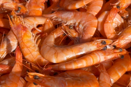 Shrimp in a market stall photo