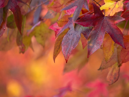 change concept: Brightly colored maple leaves during autumn Stock Photo