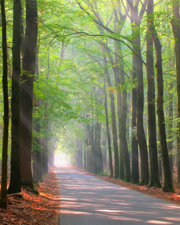 posbank: forest lane is brightly lit by sun rays Stock Photo