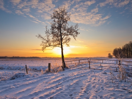 winter landscape with snow 版權商用圖片