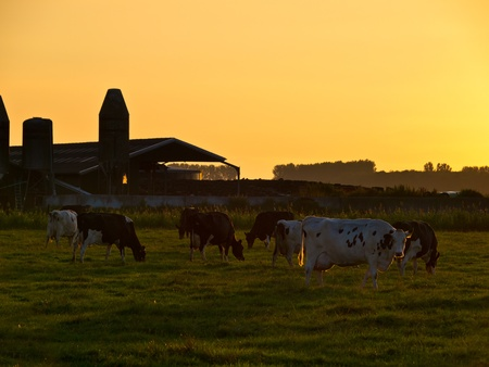 Sunset over Dutch Dairy Farm in Rural Groningen photo