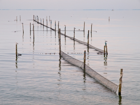 polen with gulls and fishing nets in the sea photo