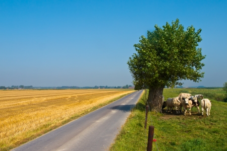 Straight Road Through the Countryside in Flanders, Belgium Stock Photo - 17324950