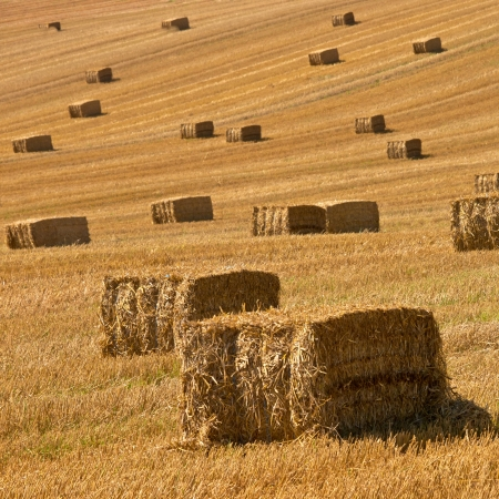 A farm field in the countryside filled with straw bales photo