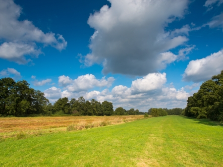 Meadows between Rows of Trees are a Common Type of Landscape in the Netherlands in Europe Stock Photo - 20183220