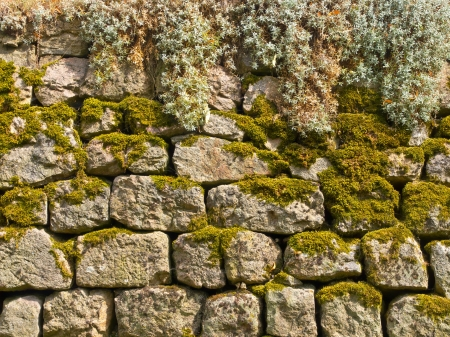 Old Stone Wall Background with Plants and Moss