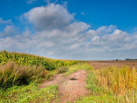 Corn Field Landscape with Trail on a Summer say photo