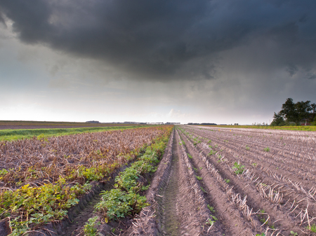 Harvested Field in Stormy Weather with Dark Threatening Sky photo