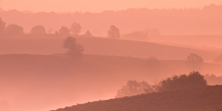 Silhouette of Hills and Trees during Sunrise over Veluwe  National Park Stock Photo - 22242472