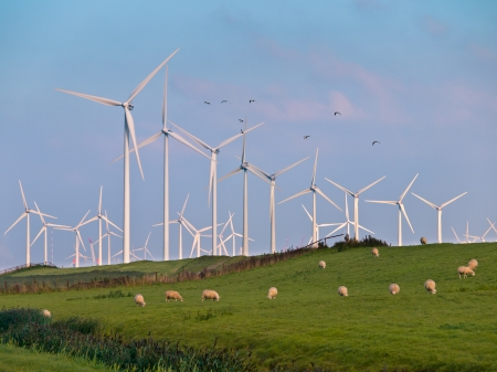 windfarm: Wind Turbine Farms can make many Casualties during Bird Migration