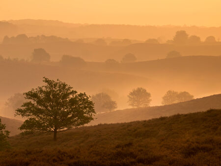 veluwe: Silhouette of Hills and Trees during Sunrise over Veluwe  National Park Stock Photo