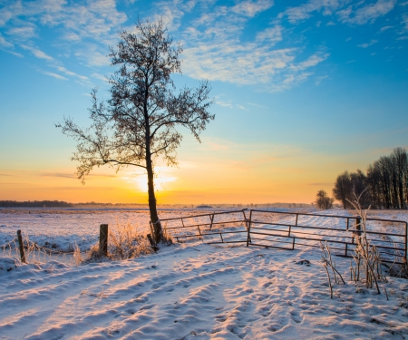 Lonely Tree in Winter Landscape with Snowy Fields and Blue Sky in Drenthe Netherlands photo
