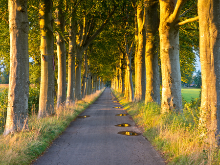 Orange light of the Sunset on Tree Stems in a Long Straight Lane photo