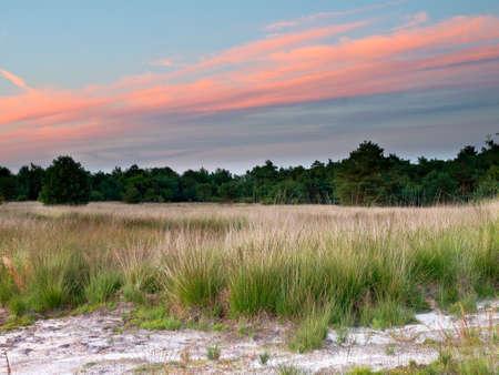heathland: Dutch Heathland on  Sand during Sunset with Pink Clouds