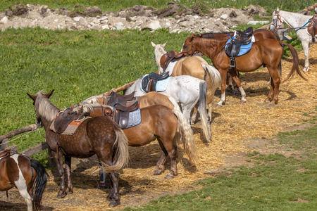 hitching post: Rental Horses waiting to take Tourist on a Ride