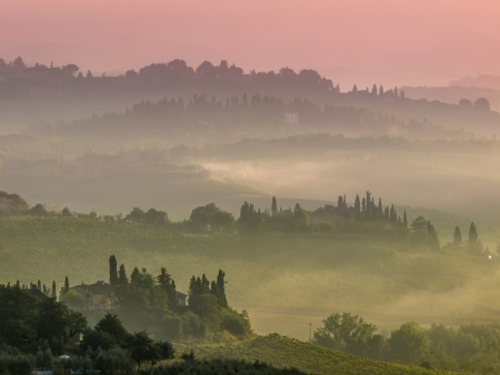 val dorcia: Cypress on the Hills of Tuscany on a Foggy morning