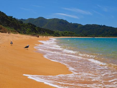 tasman: Golden Sand Beach at Totoranui, Abel Tasman National Park, New Zealand Stock Photo