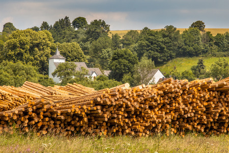Stacks of Tree Logs at a Sawmill in a Rural Setting photo