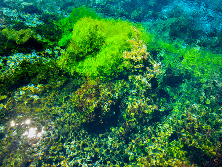 nelson: Abstract Background of Submersed Water Plants at Famous Pupu Springs in New Zealand