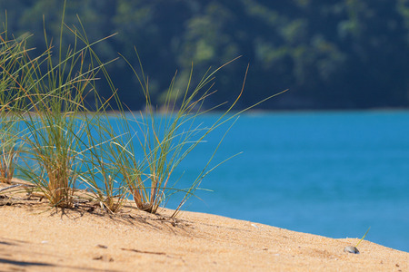 subtropics: Brightly Colored Grass in a Dune in Abel Tasman National Park, New Zealand Stock Photo