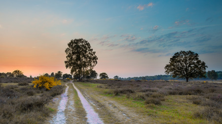 Sunset over Hoorneboegse Heide on the Utrechtse Heuvelrug near Hilversum, Netherlands photo