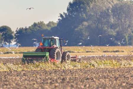 Farming in the Netherlands, Tractor with Plough in a Field with Birds Flying around photo
