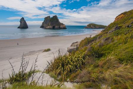 nelson: Grass and Shrub Vegetation Wharariki Beach