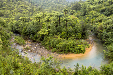 meanders: Meander in a Rainforest River, Northland New Zealand
