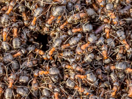 commotion: Red Ant Colony Hustle