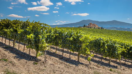 Castle Overseeing Vineyards from a Hill on a Clear Summer Day, Italy photo