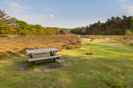 picknick: Dutch Natural Heathland Reserve Schaapdrift on Warnsborn Estate near Arnhem