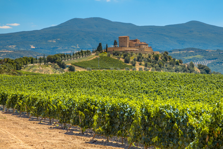 Castle Overseeing Vineyards from a Hill on a Clear Summer Day