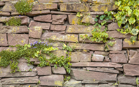 Old Stone Wall with Plants and Flowers