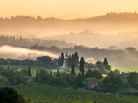 sienna: Cypress on the Hills of Tuscany on a Foggy morning