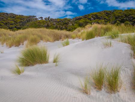 aotearoa: Grass and Shrub Vegetation Wharariki Beach, North Island, New Zealand Stock Photo