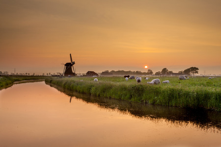 holland landscape: Dutch Landscape with Sheep and Old Windmill during Sunset