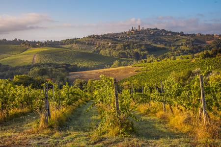 chianti: Vineyard in the hills of tuscany near San Gimignano, Italy