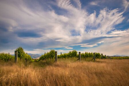 new zealand vineyard with blurred grass and vegetation by long exposure photo