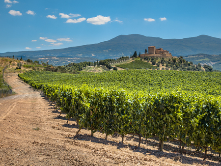 Castle Overseeing Vineyards from a Hill on a Clear Summer Day Stok Fotoğraf